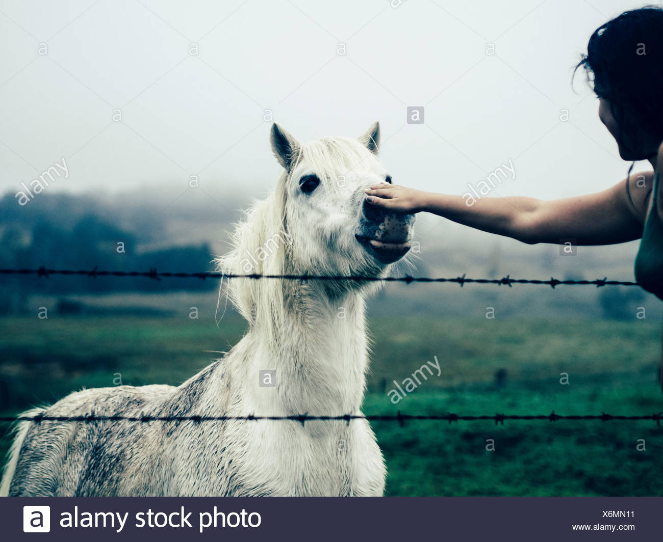 Cropped Hand Touching White Horse In Ranch Against Sky - Stock Image