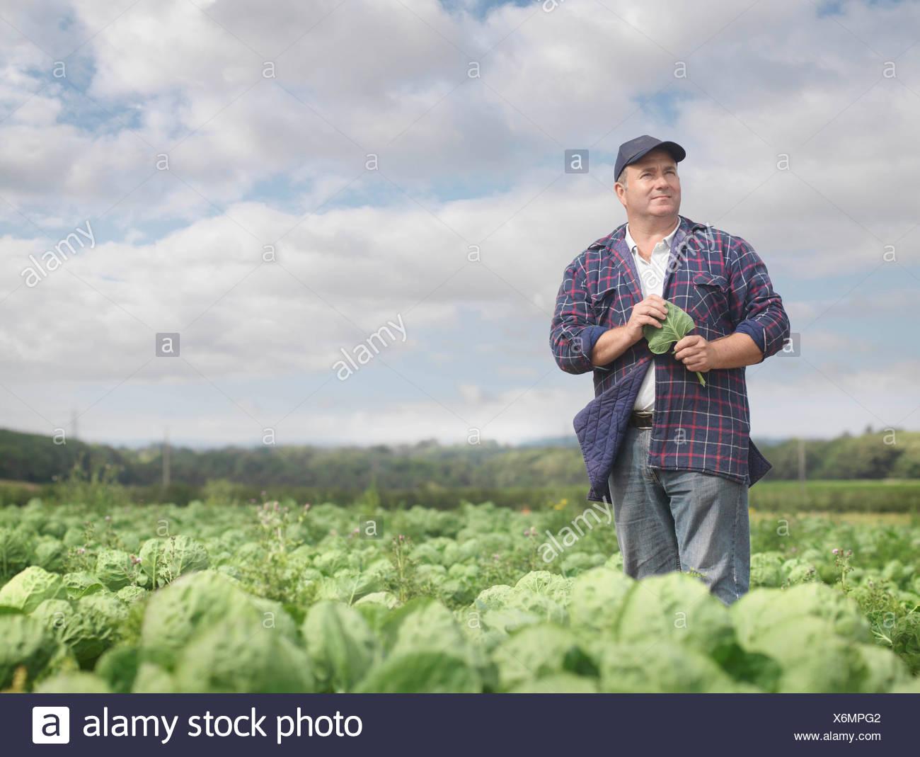 Farmer In Crop Field - Stock Image