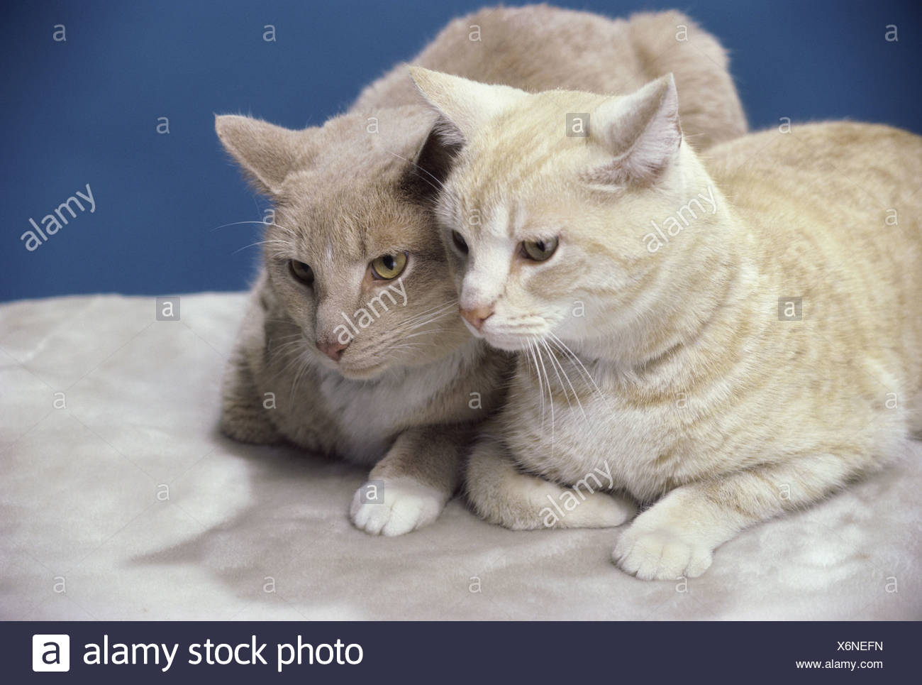 Two cats sitting together Stock Photo 279526233 , Alamy