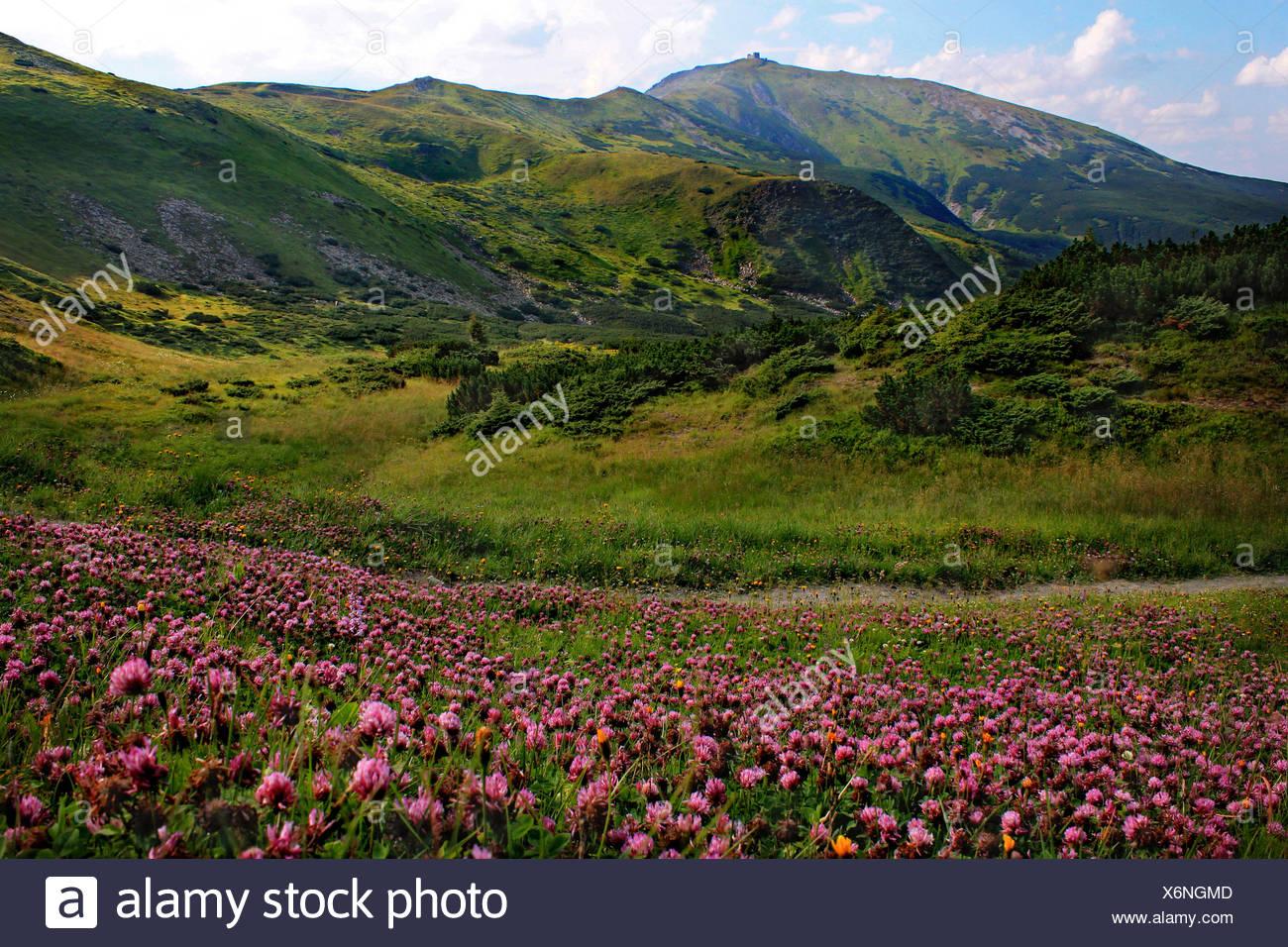 Ukraine, Carpathian mountains, Chornohora, View of Pip Ivan Mountain Stock Photo