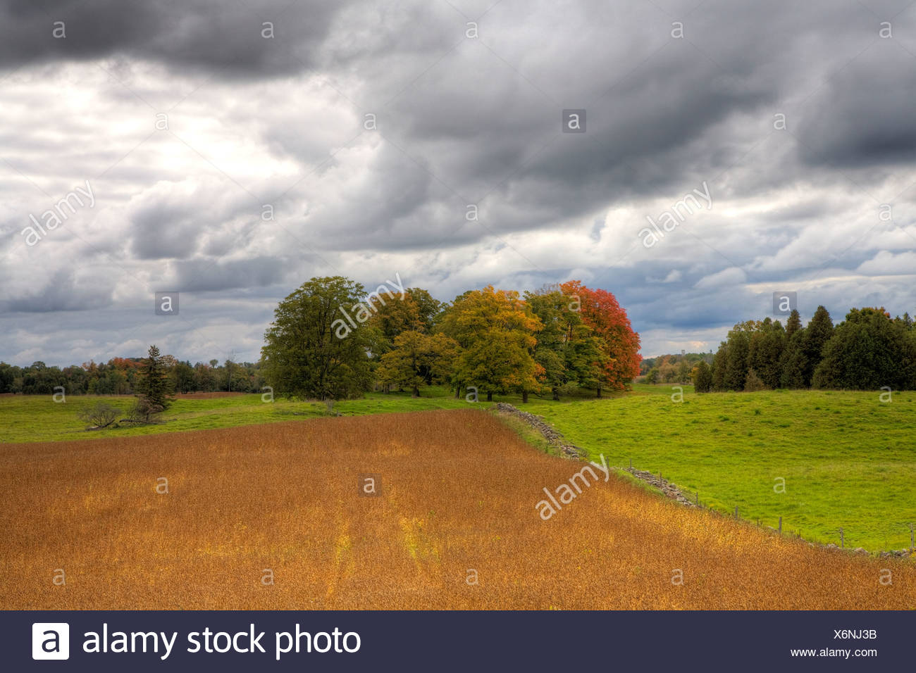 Field in early autumn, Guelph Line, Southwestern Ontario, Canada - Stock Image