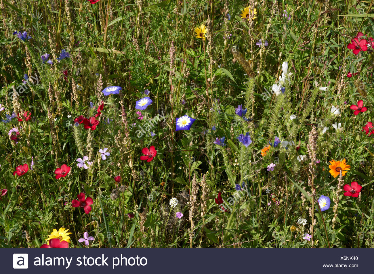 coloured, colourful, gorgeous, multifarious, richly coloured, flower, flowers, Stock Photo
