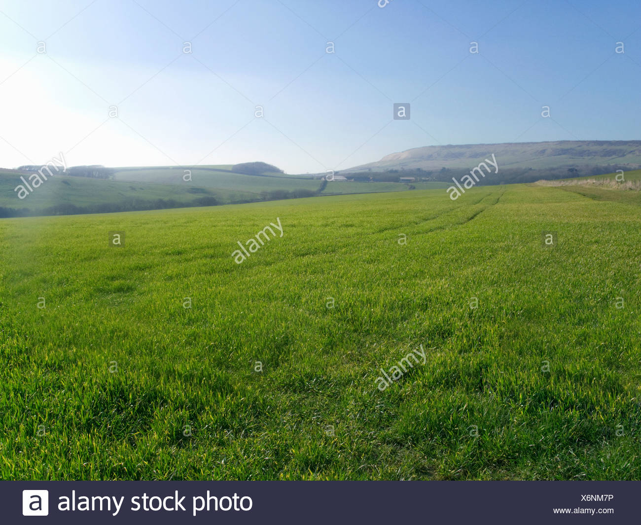 Beautiful green fields in rolling landscape - Stock Image