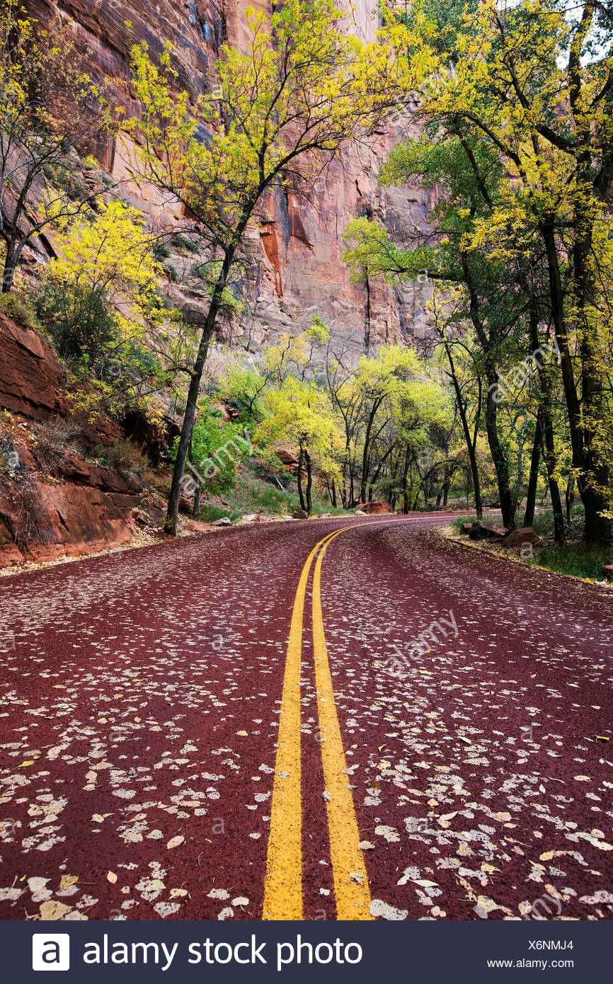 Road Through Zion Canyon - Stock Image