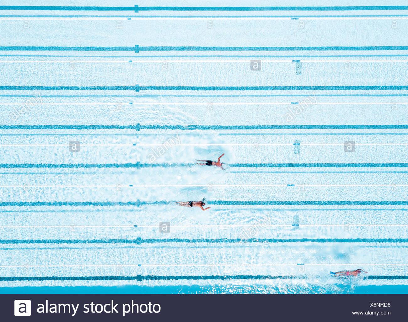 Aerial View Of Swimmers In Olympic Swimming Pool Tenerife Top Training Santa Cruz De