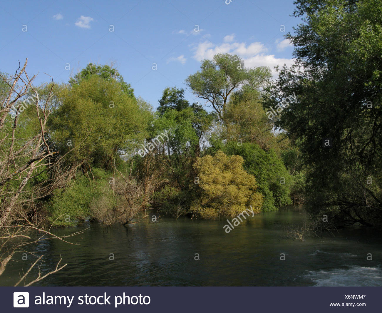floodplain near Olympia, Greece, Peloponnese, Elis - Stock Image