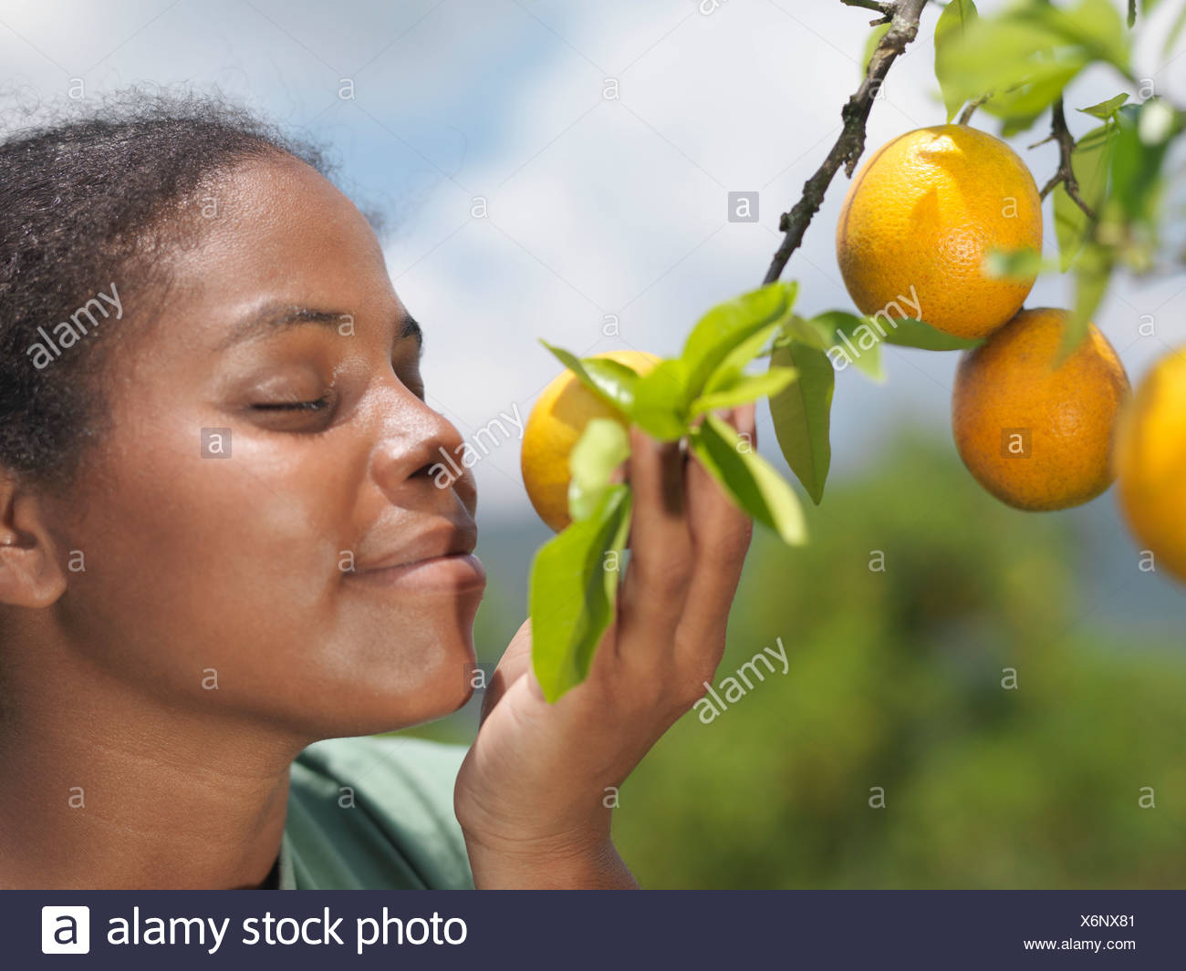 Woman Smelling Oranges On A Tree - Stock Image