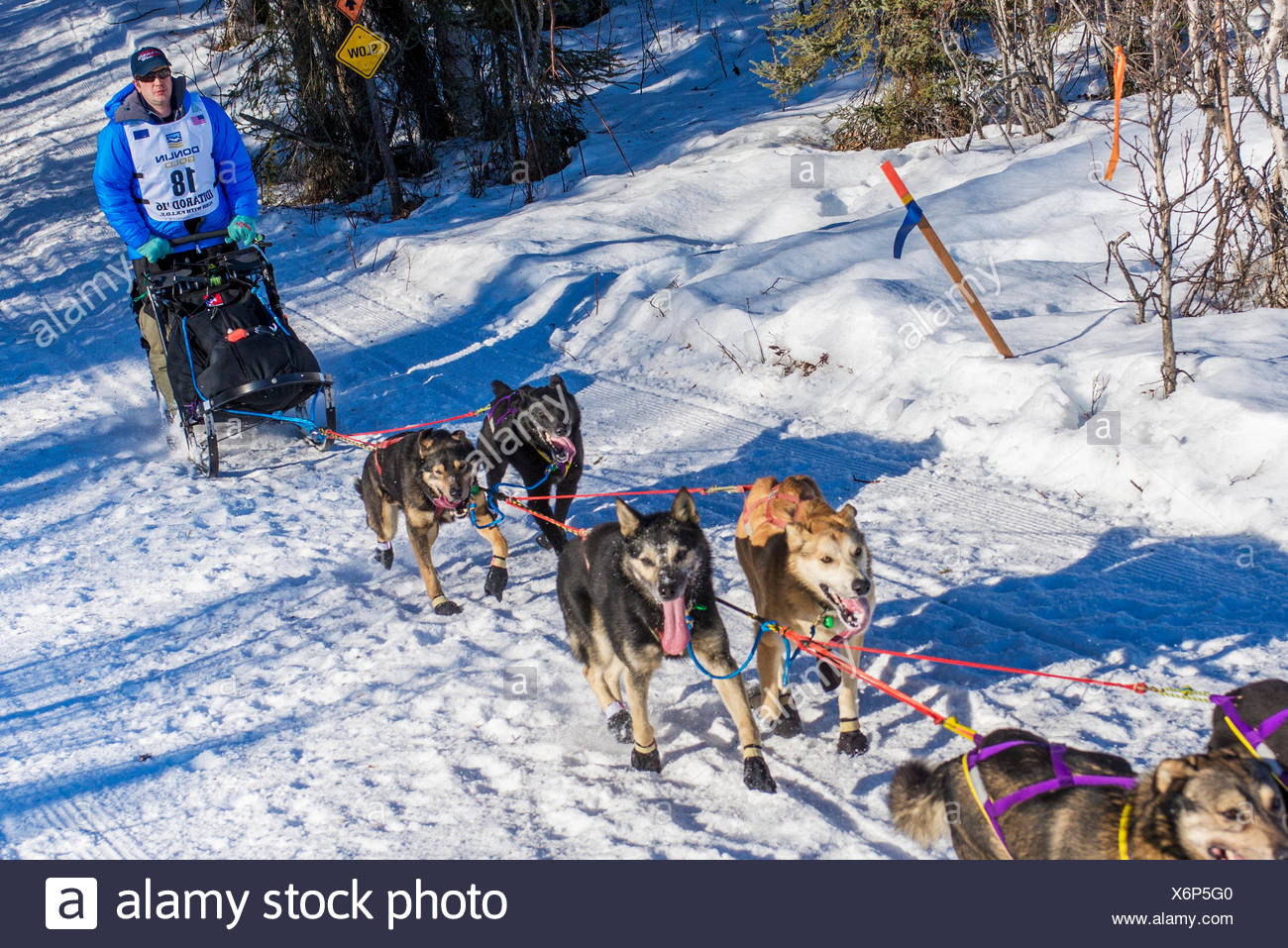 Ray Redington Jr. and team run down the trail on Long Lake shortly after leaving the re-start in Willow, Alaska during the 2016 Iditarod - Stock Image