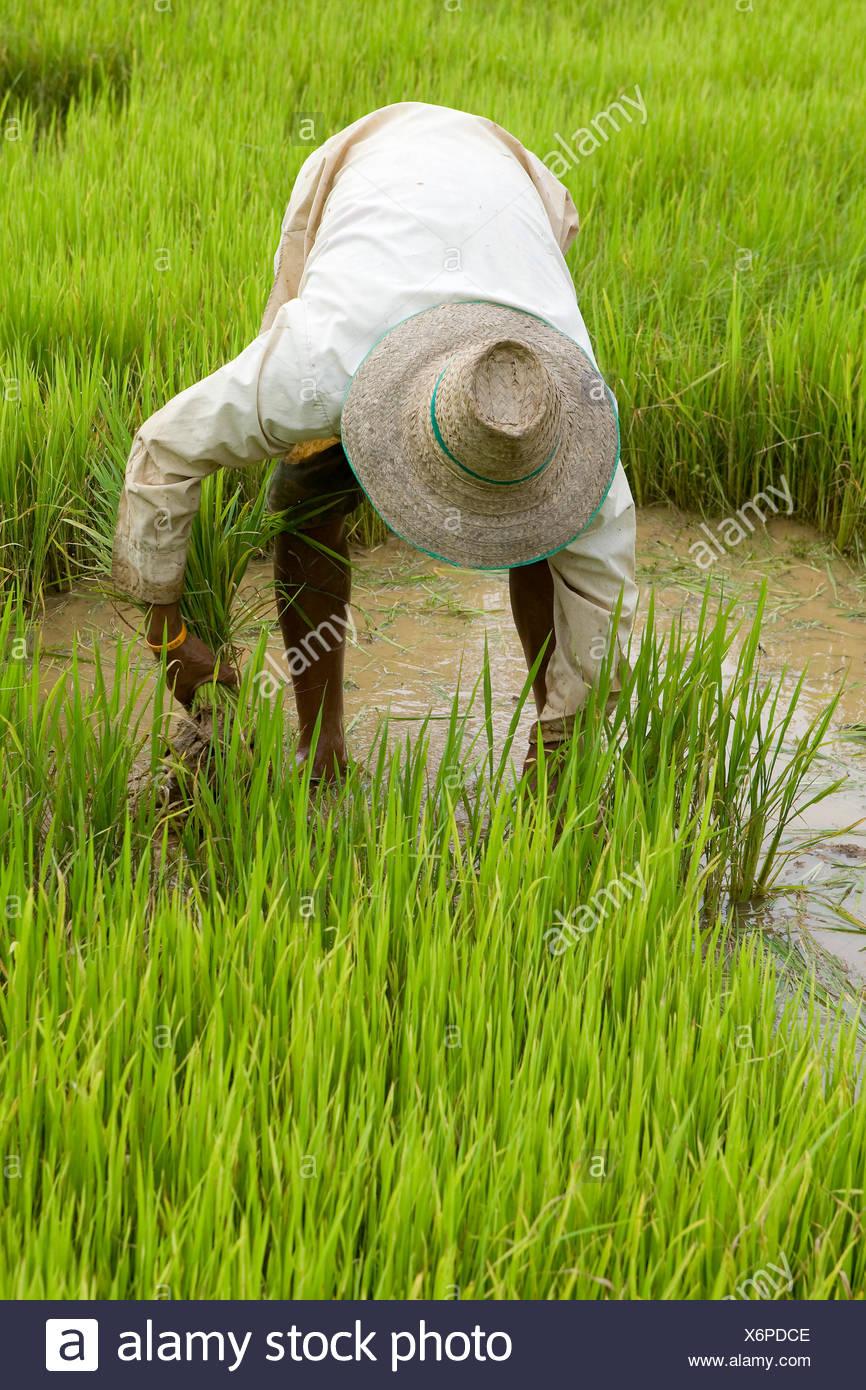 asia agriculture farming Stock Photo
