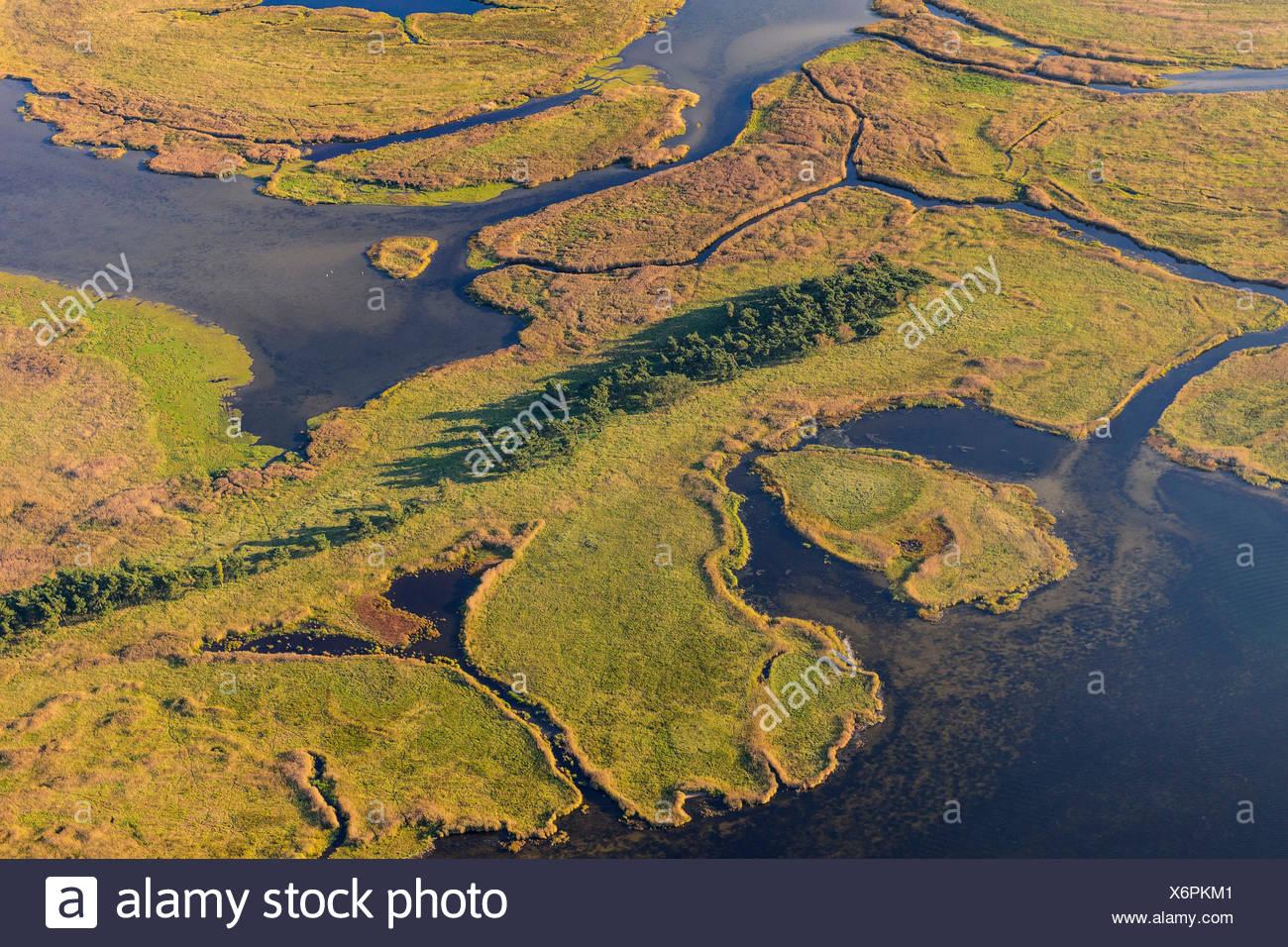 Kleine Werderinseln, Fischland-Darss-Zingst, national park Vorpommersche Boddenlandschaft, Mecklenburg-Western Pommerania, Deutschland - Stock Image