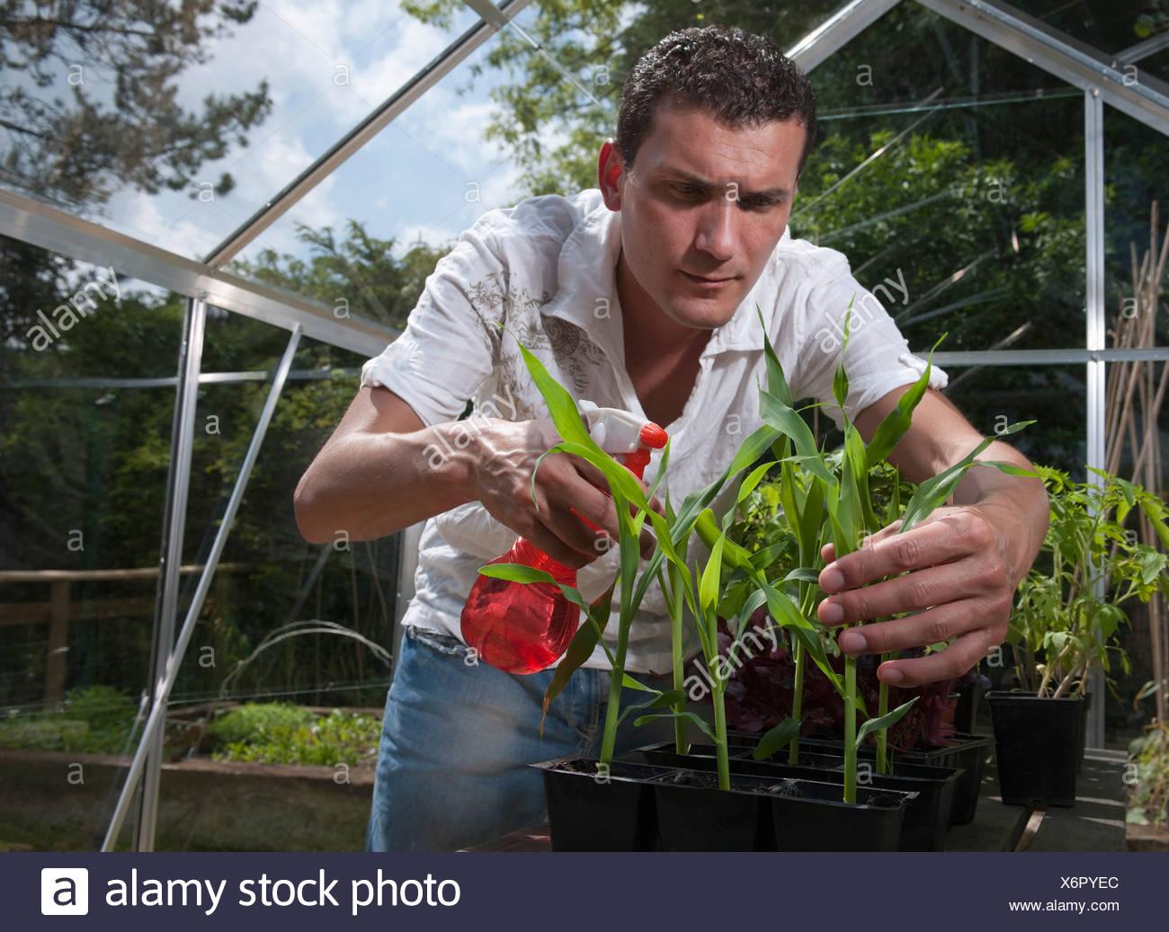 Man In Greenhouse Spraying Plants Stock Photo 279558340 Alamy