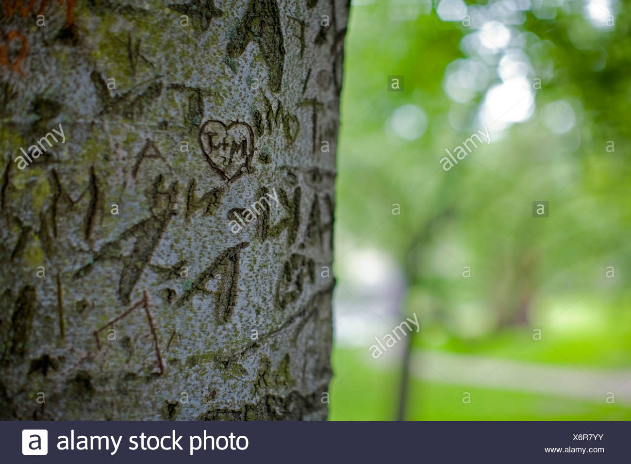 Close-up of love expressions carved on a cropped tree trunk against blurred green background - Stock Image