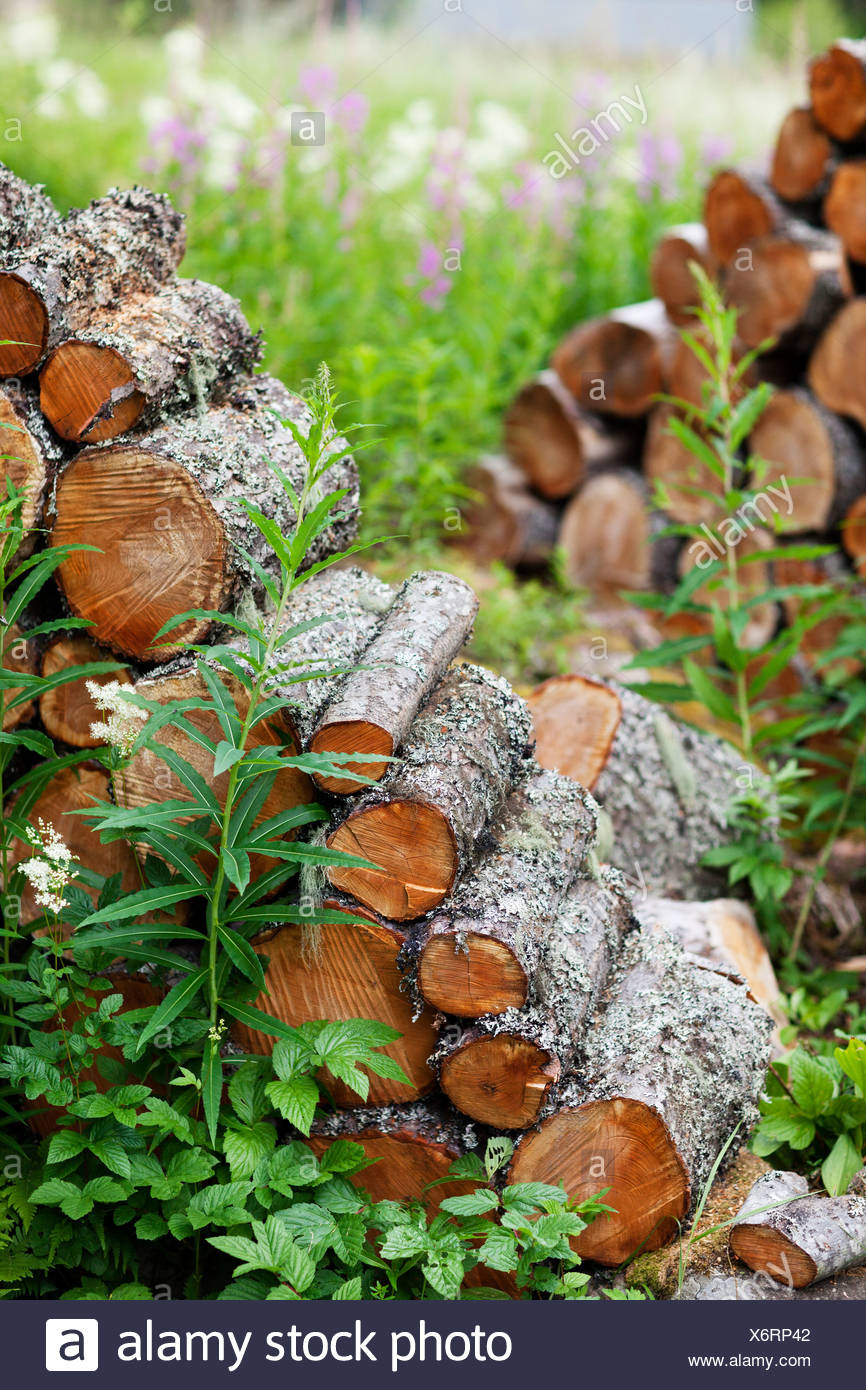Close-up of woodpile - Stock Image