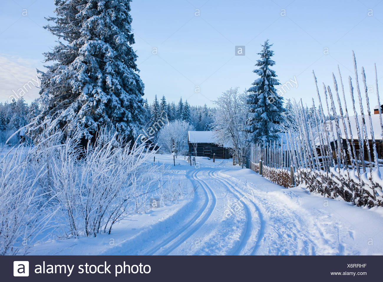 Wintry mountain pasture, Sweden. - Stock Image
