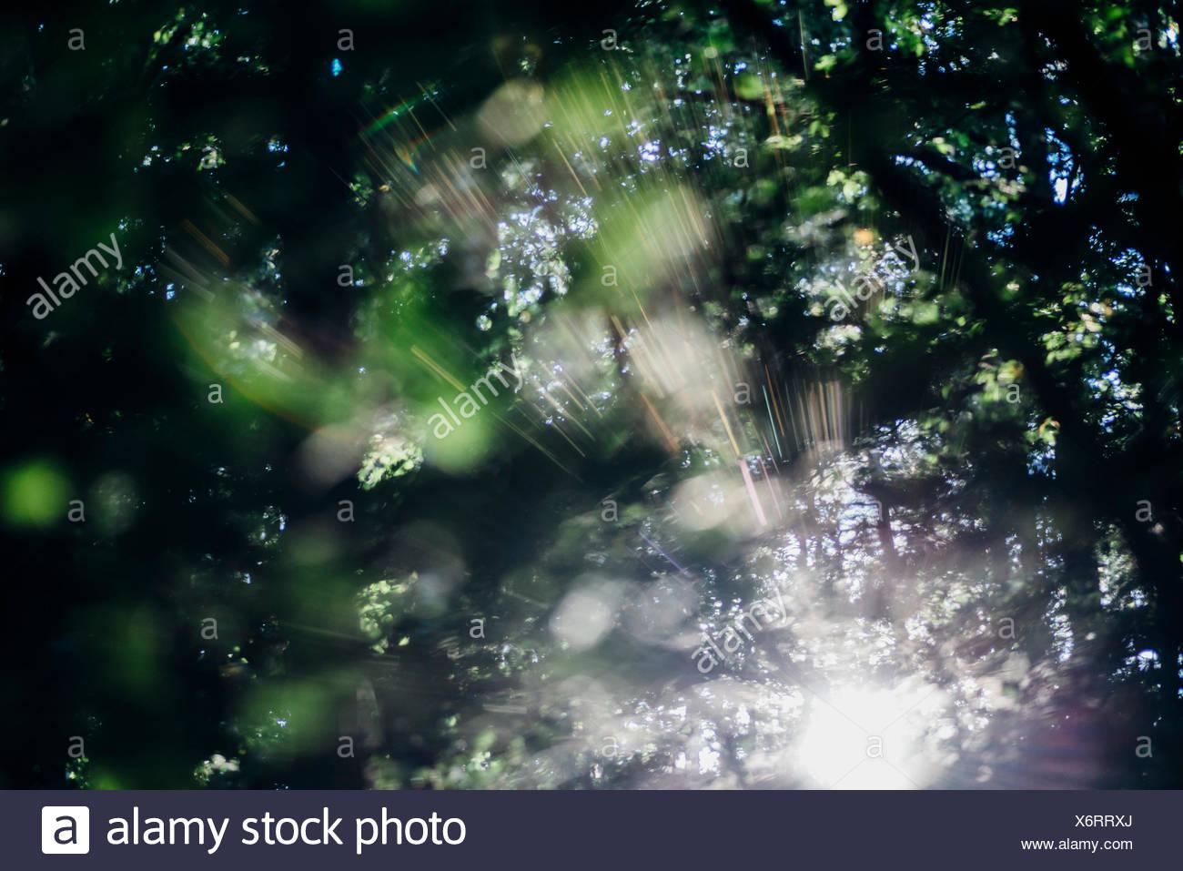 Sachsen, Deutschland, Herbst, Laubfärbung Stock Photo