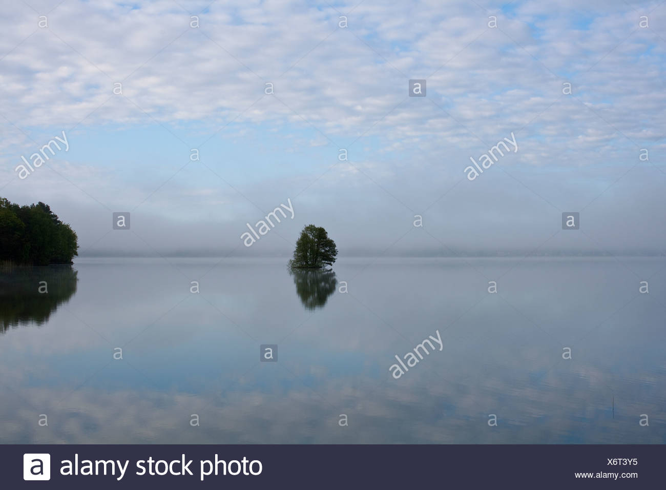 Scenic landscape with water and lonely tree - Stock Image