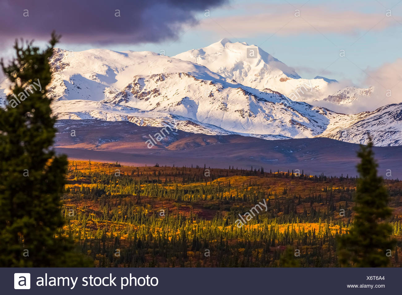 Mt. Silvertip shines in the evening sun in autumn, viewed from the Richardson Highway south of Delta Junction; Alaska, United States of America - Stock Image