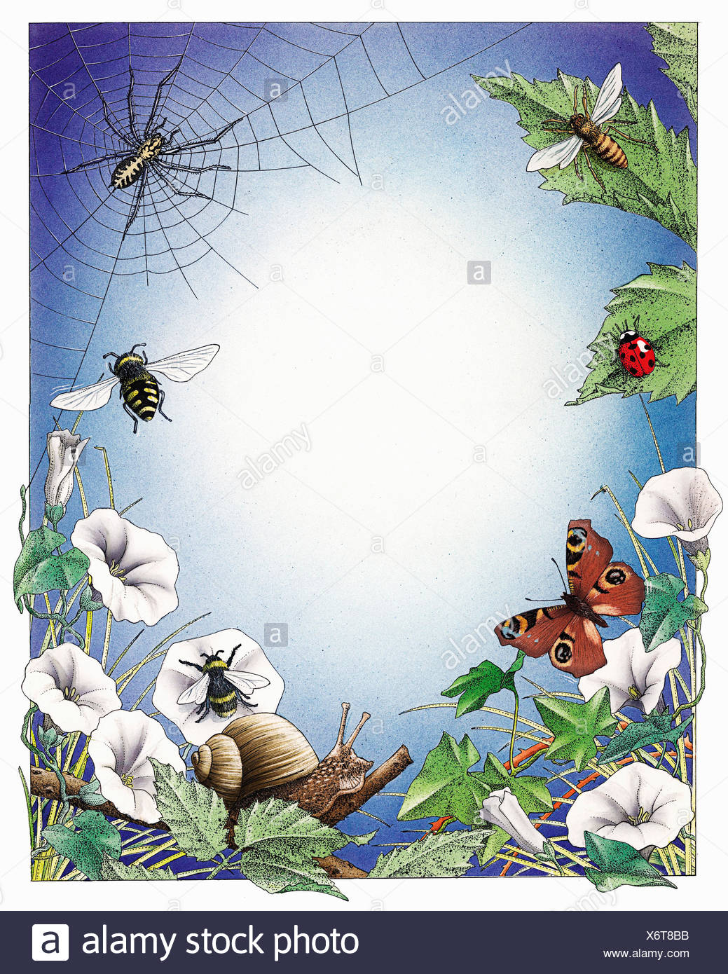 Spider, snail and insects in border of wildflower foliage - Stock Image