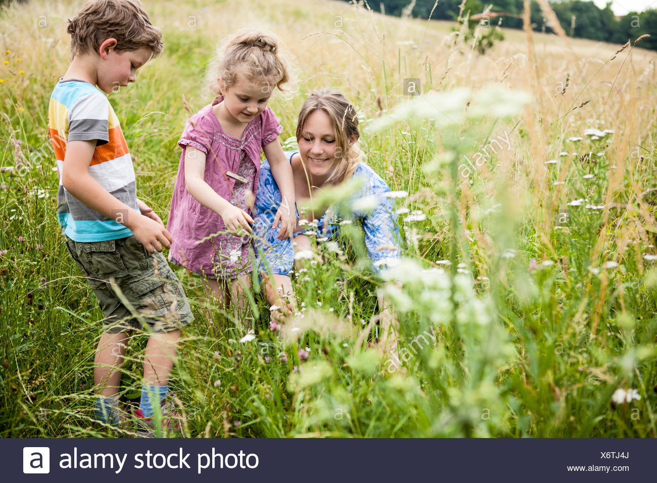 Mother with children picking flowers in the meadow Stock Photo