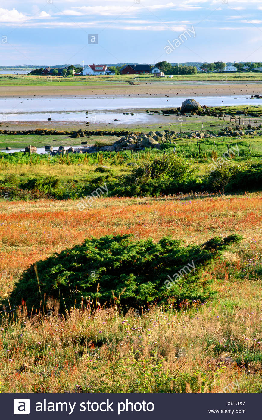Pastureland by the sea in Halland, Sweden. - Stock Image