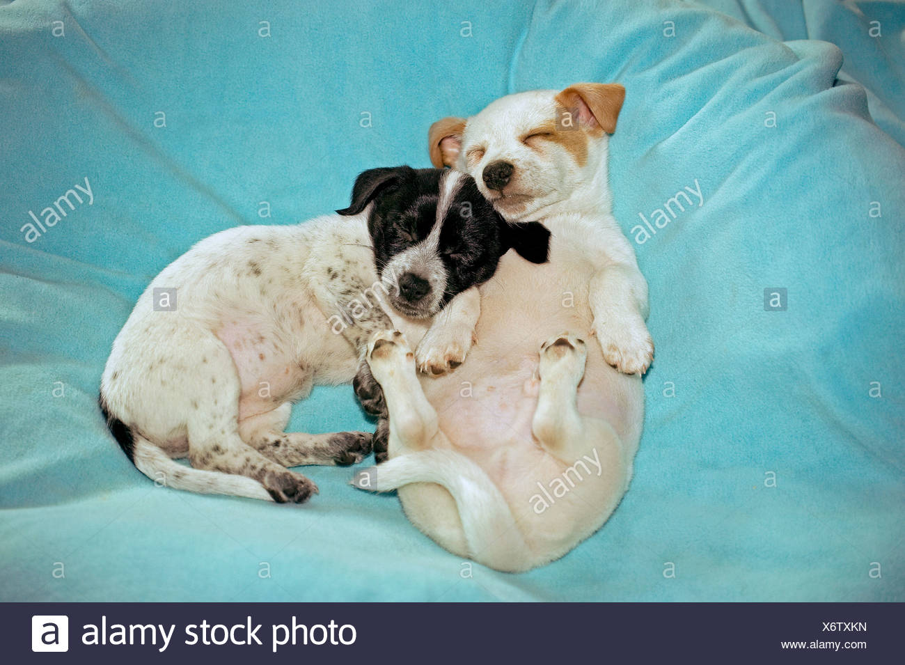 Two Puppies Sleeping Stock Photos & Two Puppies Sleeping Stock ...