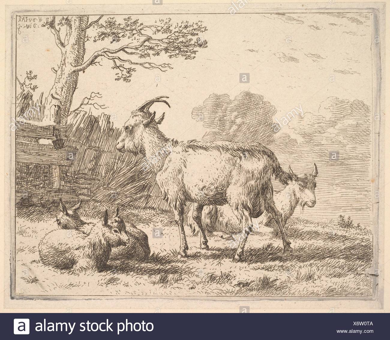 Four goats; at the back a nanny goat lies on the ground, in the middle a billy goat stands, in the front two kids lie on the ground, a fence and tree - Stock Image