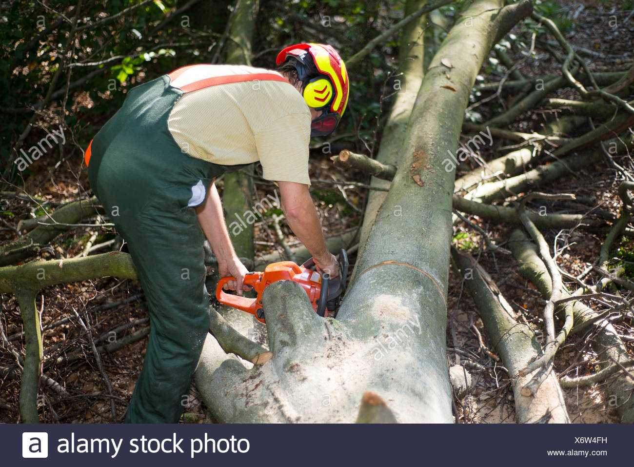 lumber jack during work with protective clothing Stock Photo