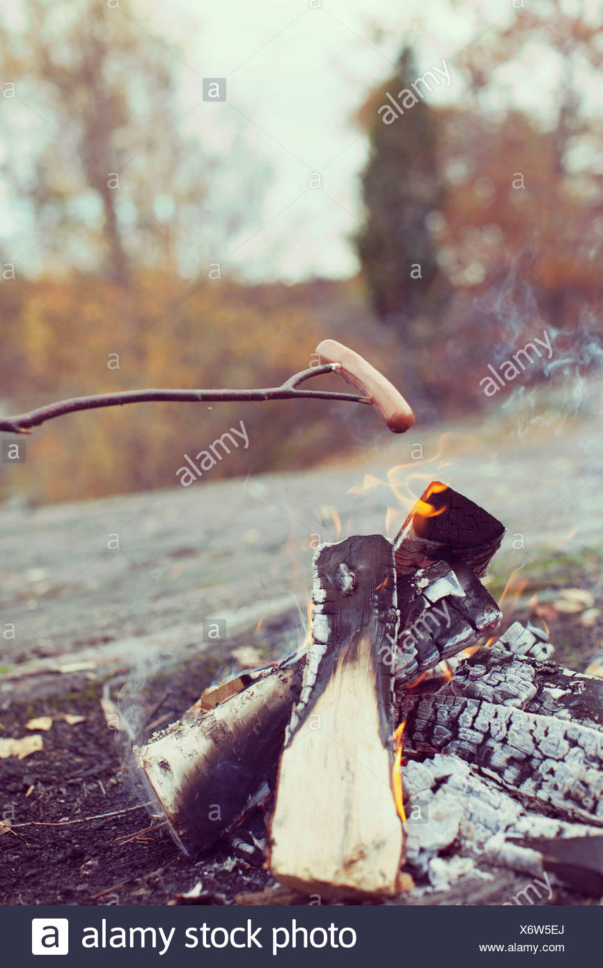 Sausage cooking on campfire in forest - Stock Image