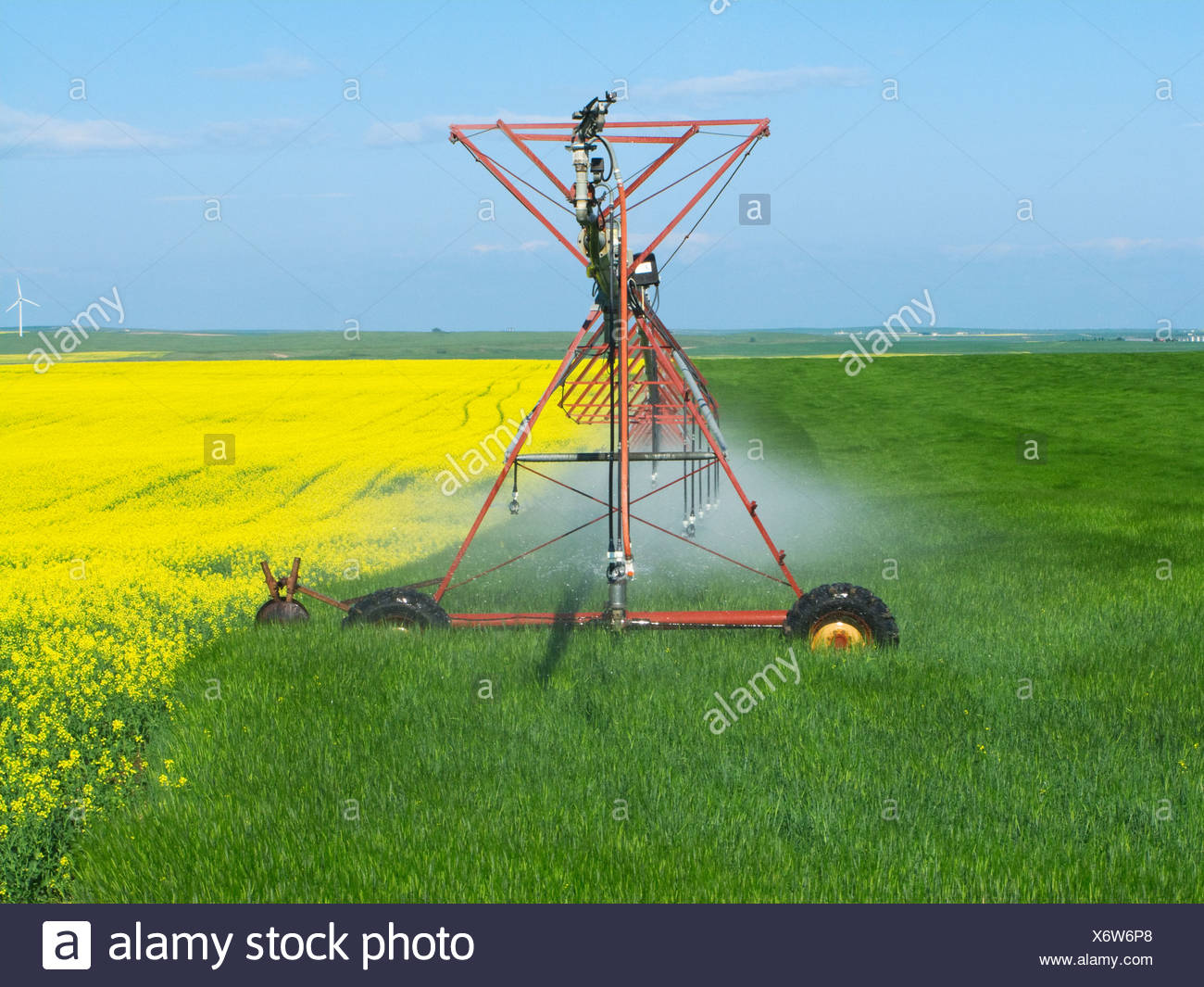 A center pivot irrigation system crossing from a blooming canola field to an adjoining cereal grain field / Alberta, Canada. - Stock Image
