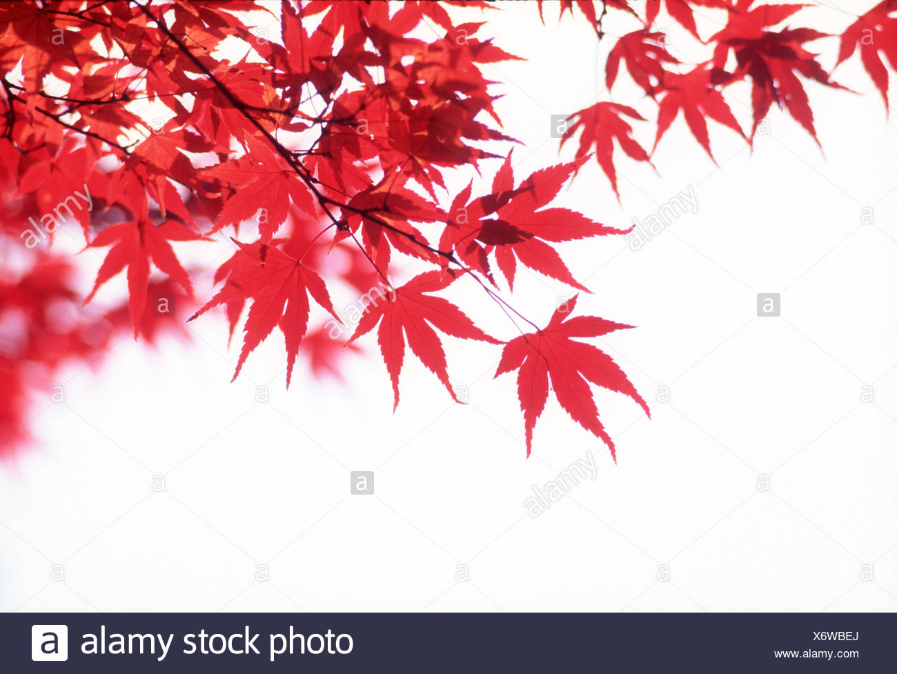 View of stems with red leaves - Stock Image