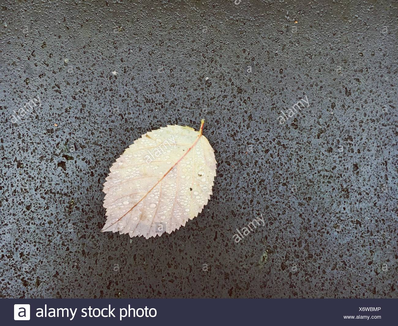 Directly Above View Of Wet Leaf On Stone - Stock Image
