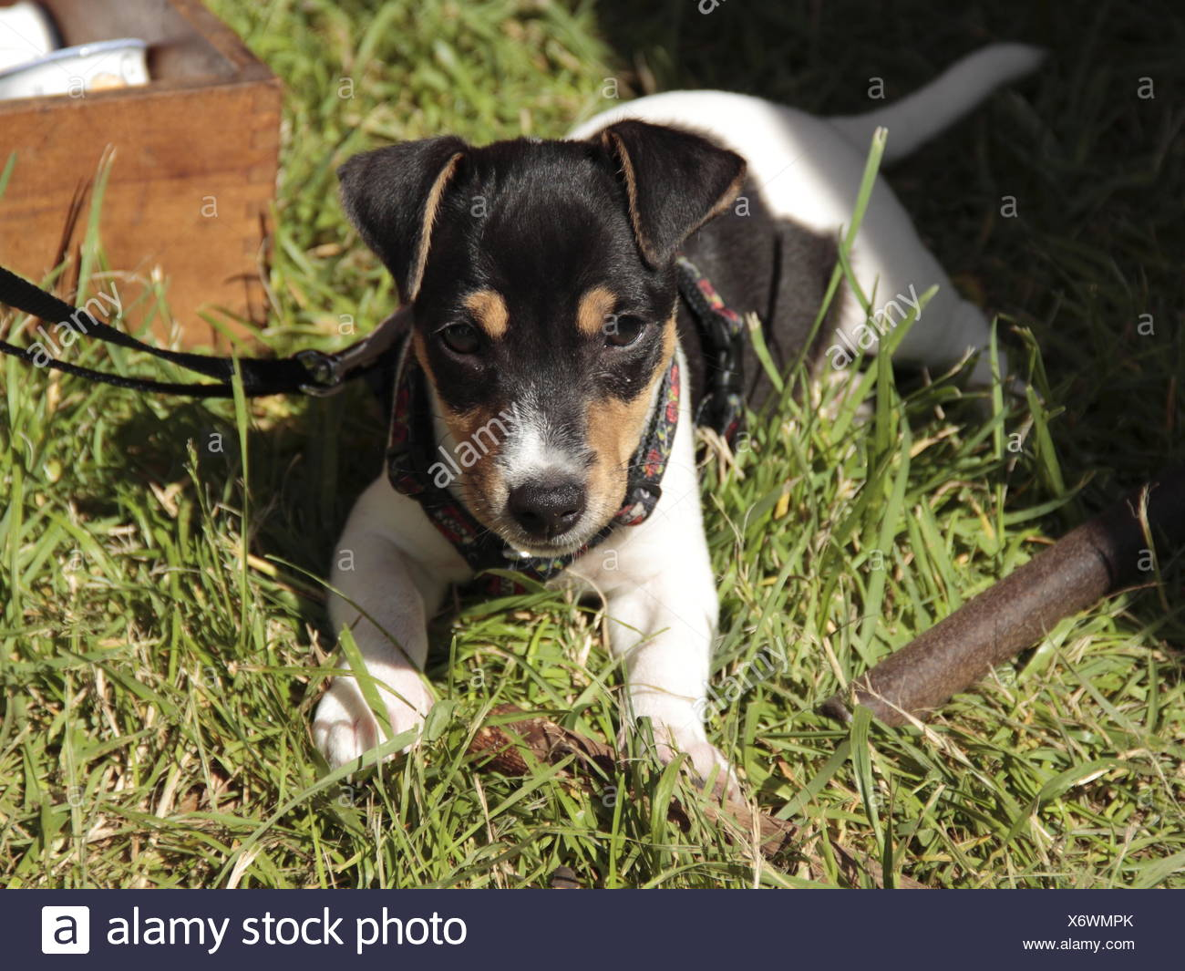 pup - Stock Image