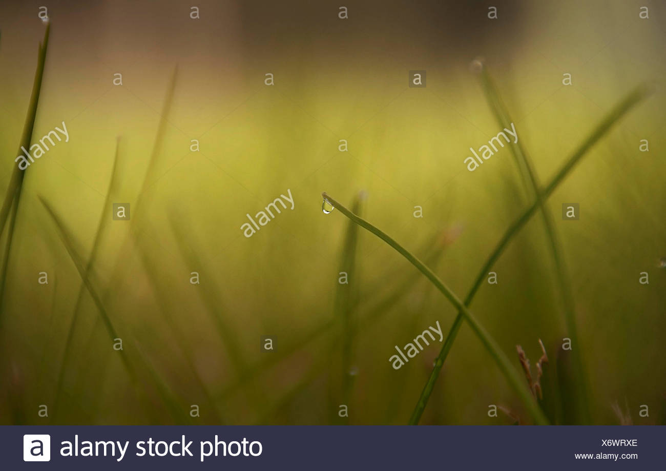 Close up of water drops on grass blades Stock Photo 279621398 Alamy