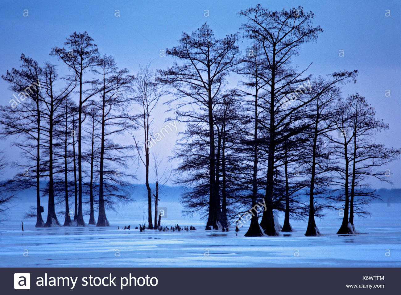 Winter Reelfoot Lake Tennessee  Reelfoot Lake located in northwest