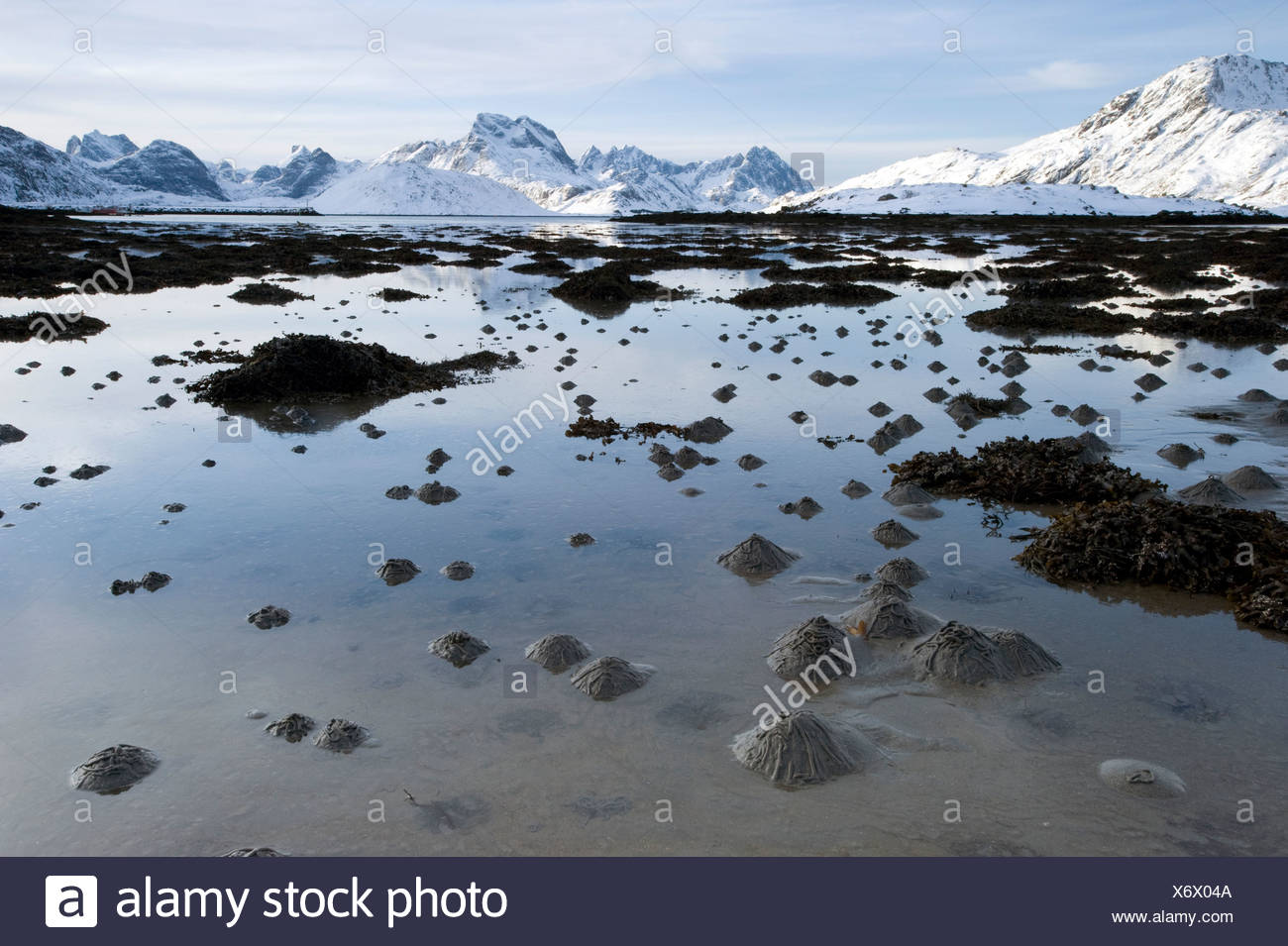 Sand piles made by Lugworms or Sandworms (Arenicola marina) on the Lofoten Islands, Nordland, Norway, Europe - Stock Image