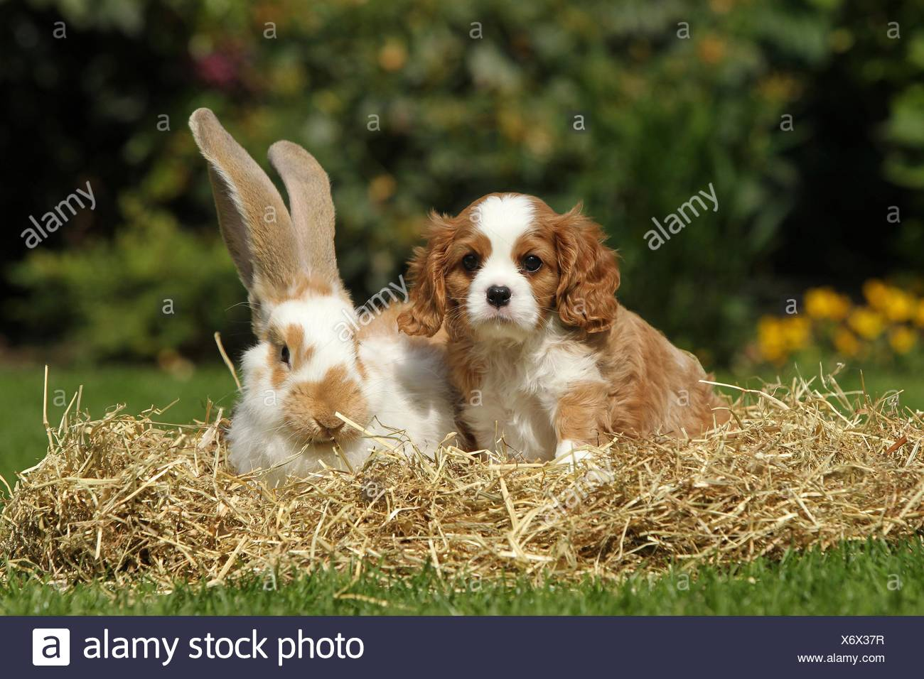 dog and rabbit - Stock Image