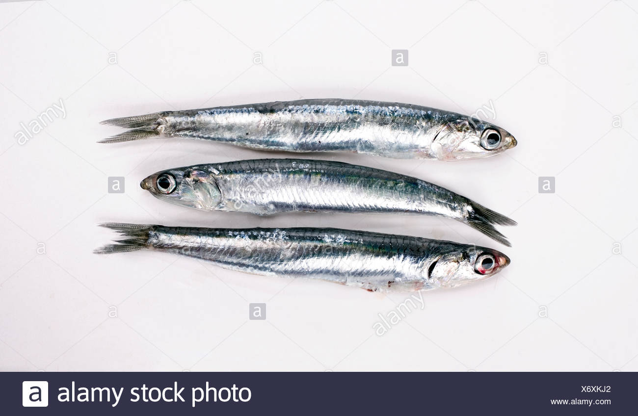Anchovies on white background, close-up - Stock Image