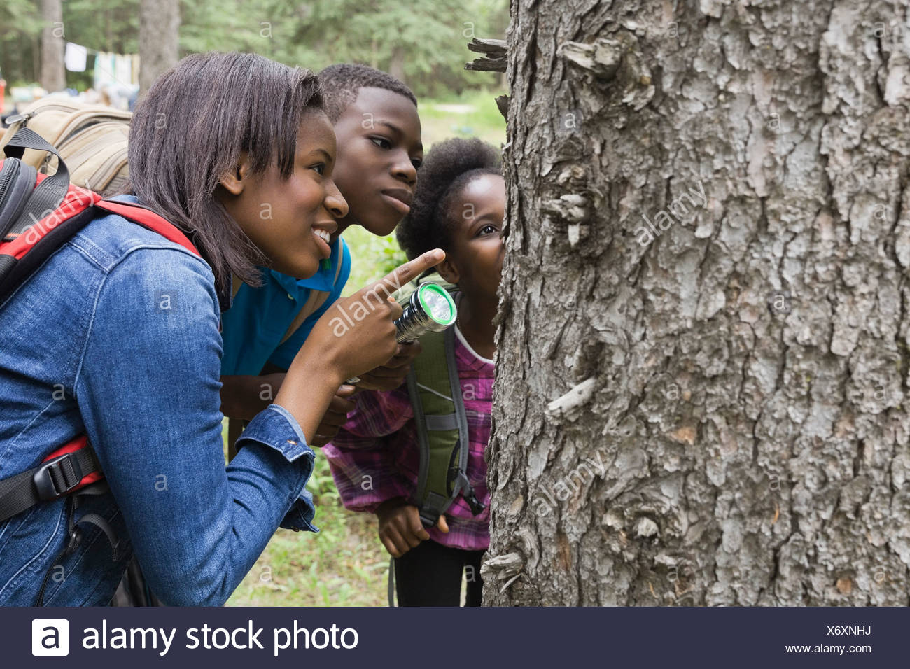 Siblings exploring tree bark - Stock Image