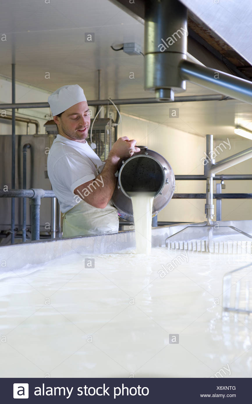 Cheese maker mixing rennet  with milk in vat to begin cheddar cheese making process - Stock Image