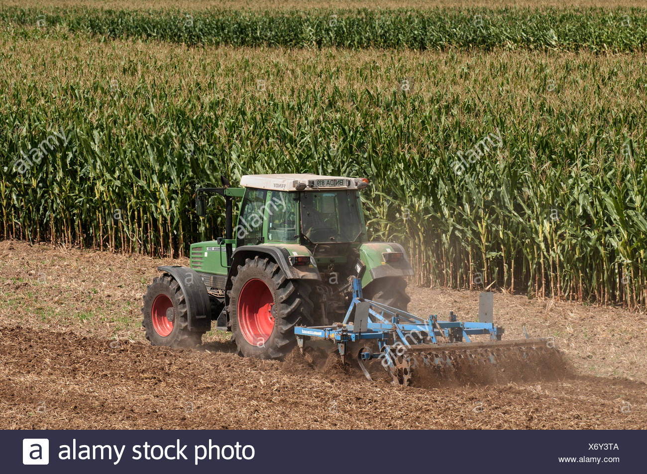 Tractor with a cultivator in front of a field of Corn (Zea mays subsp. Mays), PublicGround - Stock Image