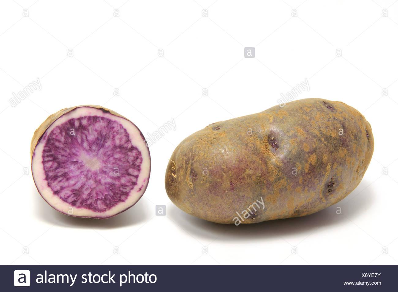Blaue Kartoffel (Solanum tuberosum) freigestellt vor weißem Hintergrund - Stock Image
