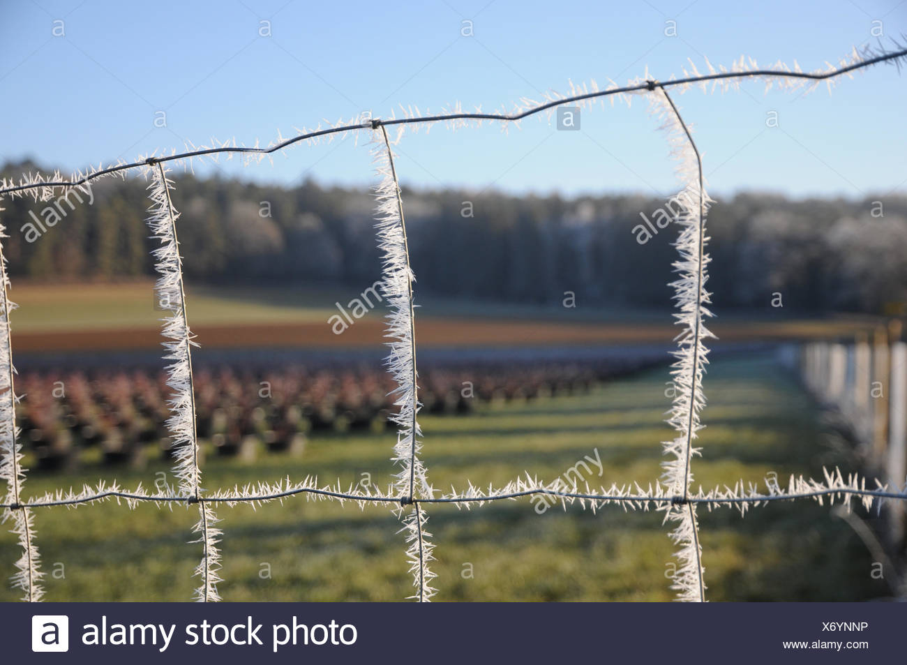 Wild Protecting Fence, White Frost - Stock Image