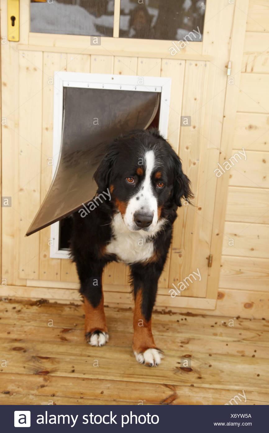 Hundeklappe / dog flap - Stock Image