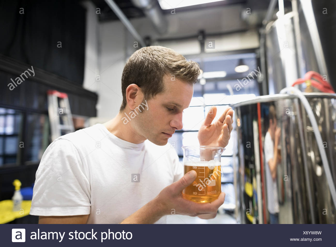 Male brewer smelling beaker of beer in brewery - Stock Image