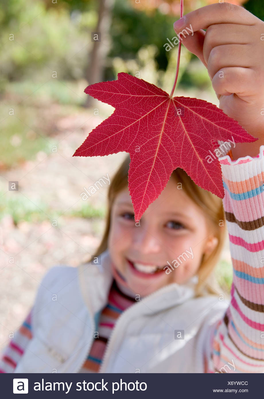 Girl 7 9 holding aloft red maple leaf in park in autumn smiling close up portrait - Stock Image