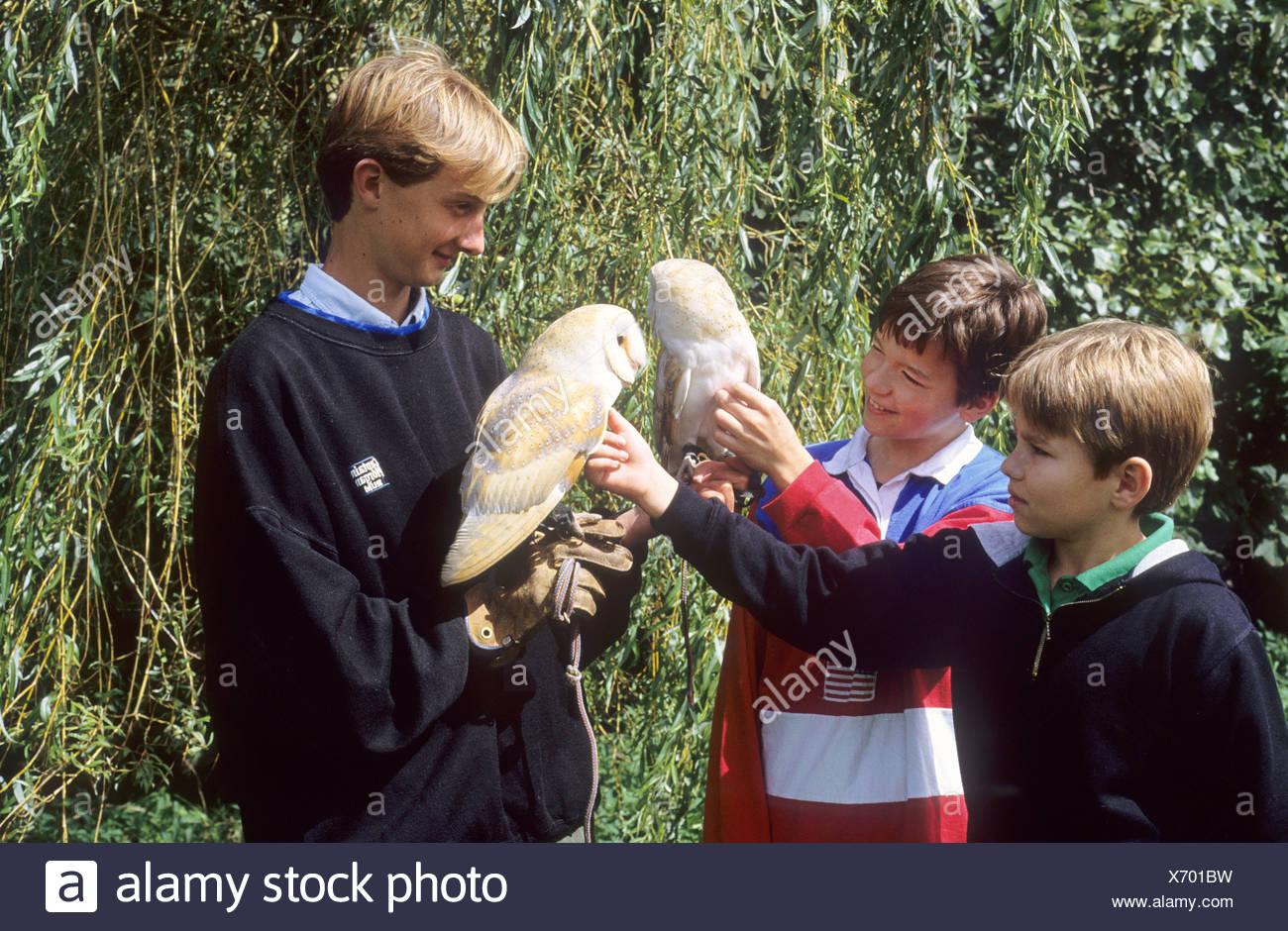 Long Sutton Falconry Park Lincolnshire Barn Owl owls handler boys children - Stock Image