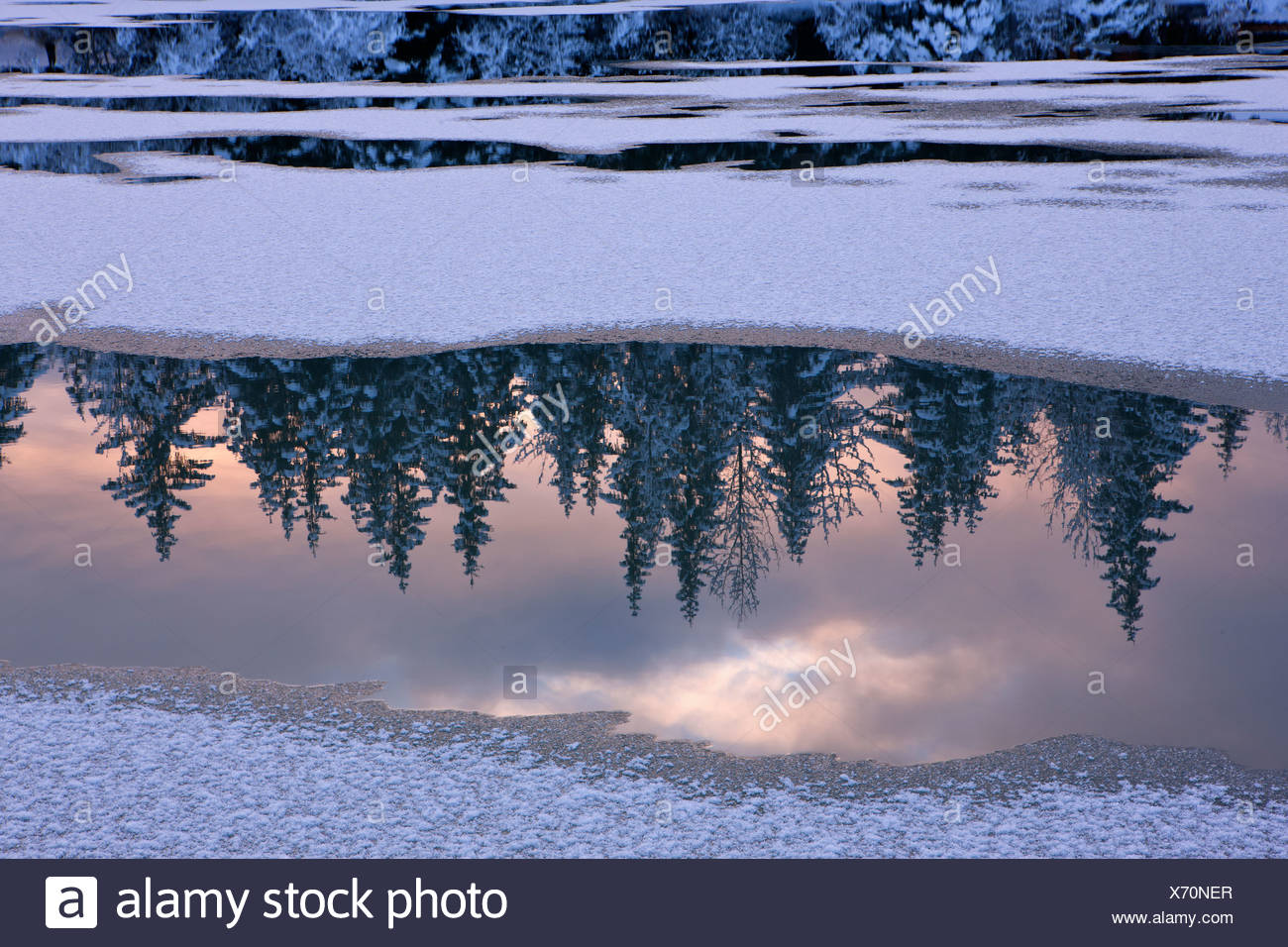View of snowy forest reflected in open water of Mendenhall River, Tongass National Forest, Southeast Alaska, Winter - Stock Image