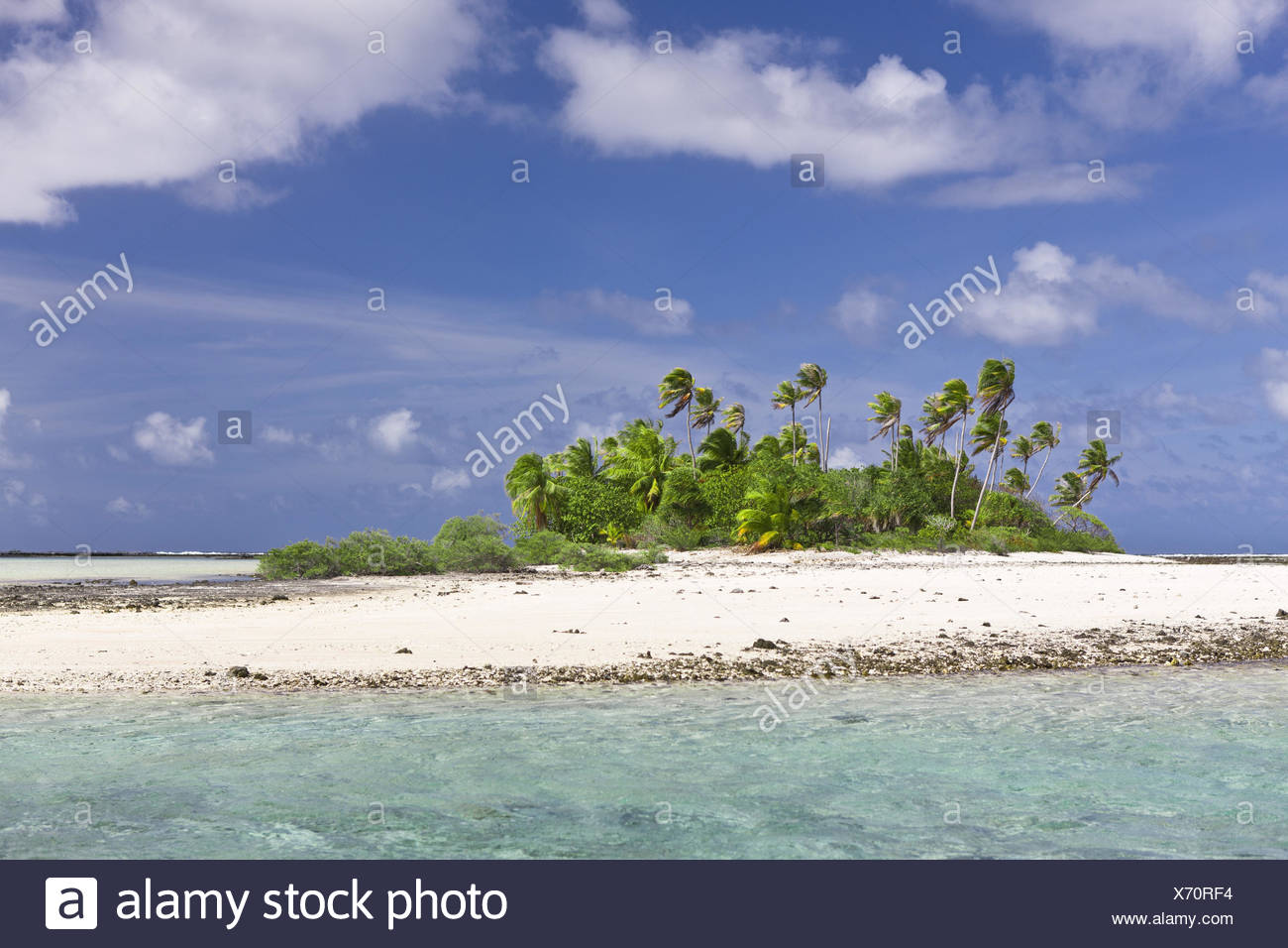 The Pacific Ocean, French Polynesia, Tuamotu archipelago, atoll Tikehau, scenery, island, ocean, archipelago, Volcanically, atoll, lagoon, beach, sandy beach, palm, level, vegetation, heaven, blue, clouds, windy, - Stock Image