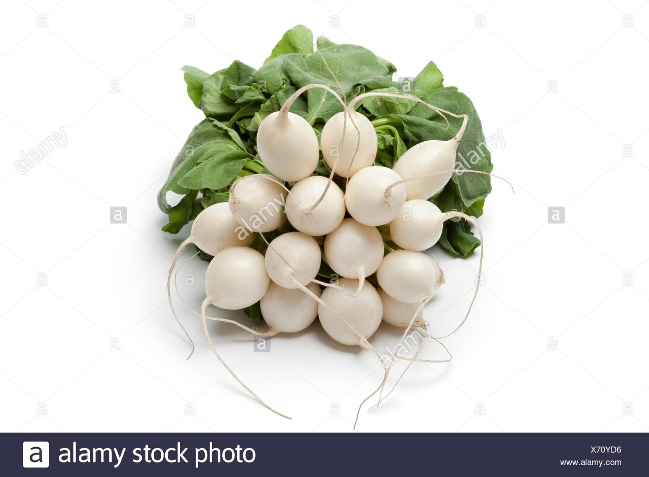 Bunch of white radish on white background - Stock Image