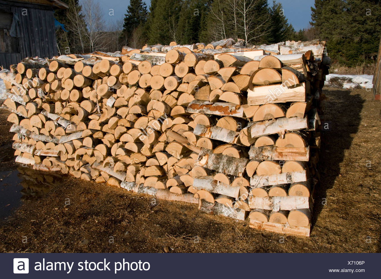 Neatly stacked pile of firewood cut from birch trees, Ontario, Canada - Stock Image